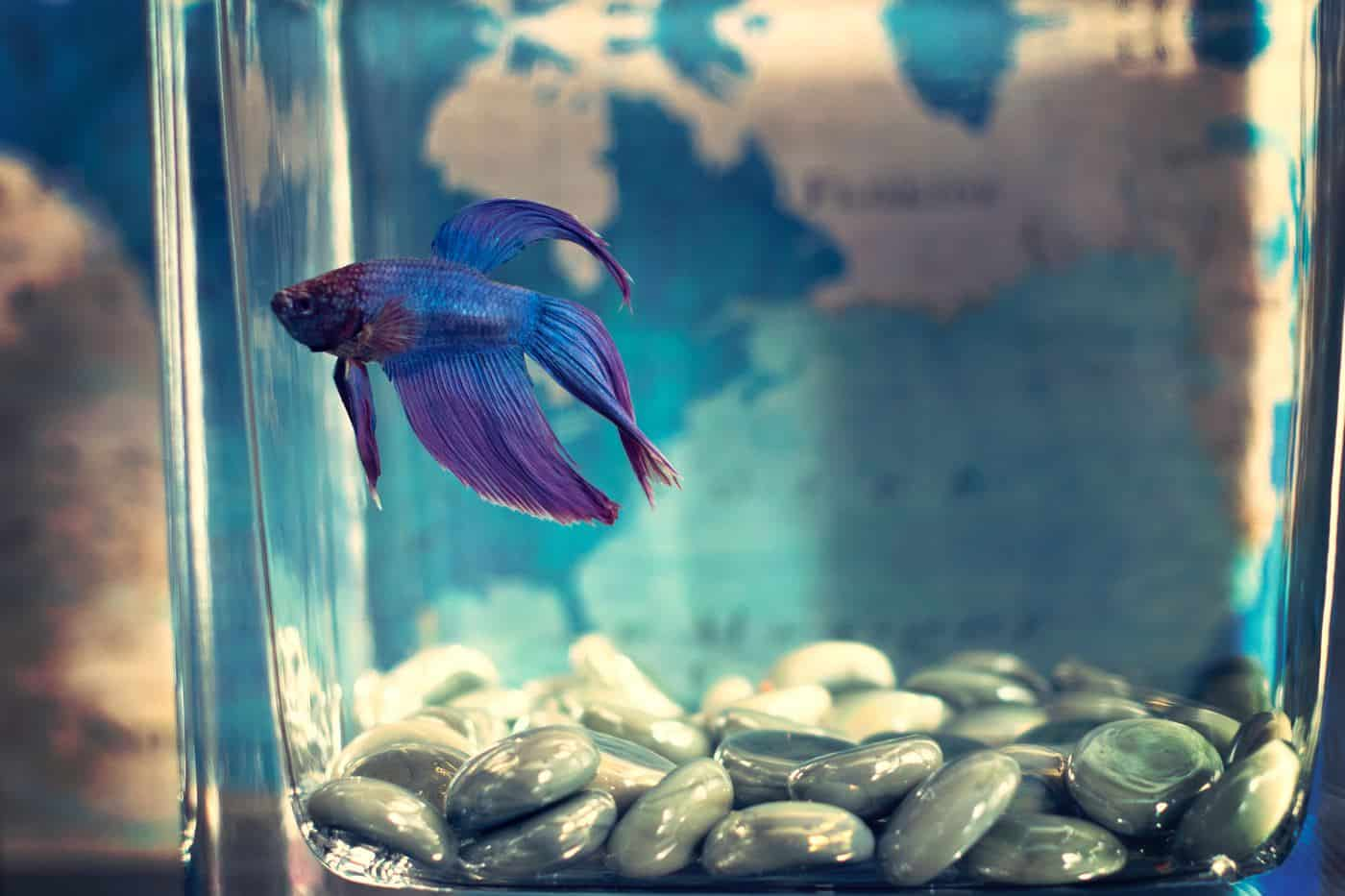 White Stringy Poop In Fish Aquatic Veterinary Services